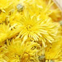 食用菊の茹で方、食べ方と保存方法