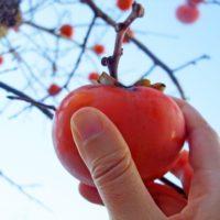 やわらかい柿の食べ方。食事にも出来る!?