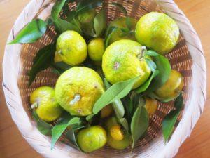 完熟手前の柚子