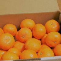 酸っぱいみかんを美味しく食べる食べ方とアレンジ方法