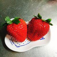 ふるさと納税「いちご」珍しい希少な品種はコレ!